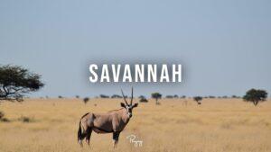 """Savannah"" - Upbeat Melodic Rap Beat | New Hip Hop"