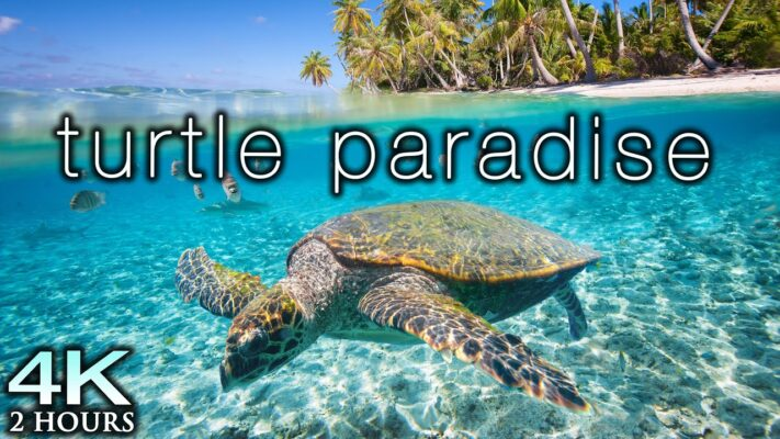 TURTLE PARADISE 4K Undersea Ambient Nature Relaxation Film +